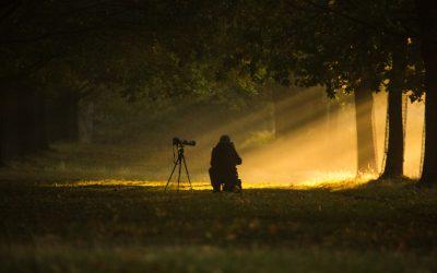 Die besten Gegenlichtblenden (Sonnenblenden/Streulichtblenden) zum Fotografieren und Filmen